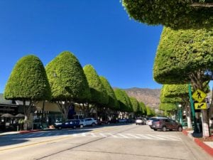 Street view of downtown Glendora with large cone shaped green trees and dry hills in background.